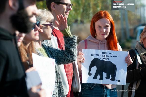 Чернівчани закликали людей не відвідувати цирк з тваринами (фото)