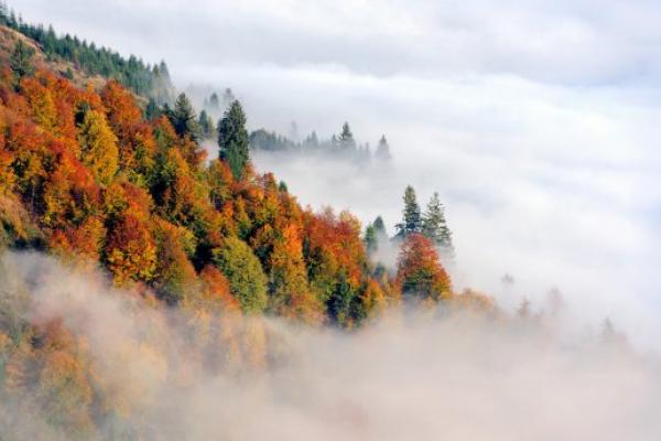 Сьогодні по всій Чернівецькій області очікують туман