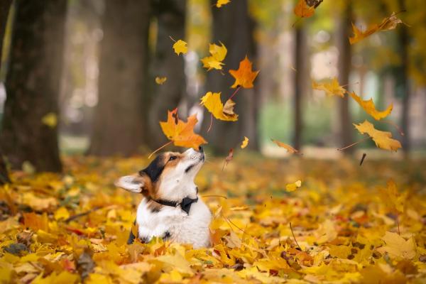 У перші дні листопада на Буковині буде хмарно