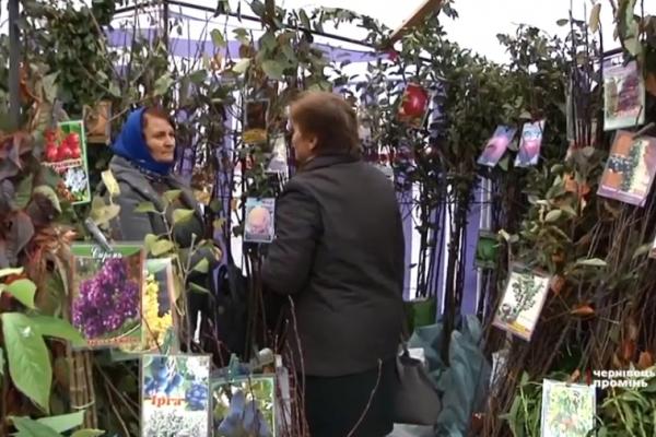 На ярмарку «Буковинська осінь» пропонують екзотичні саджанці (Відео)