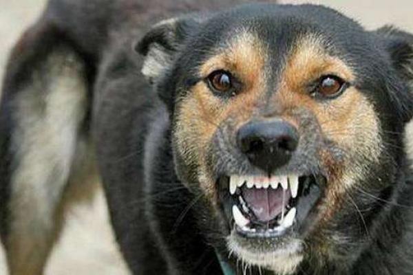 У Чернівцях скажений собака покусав людину