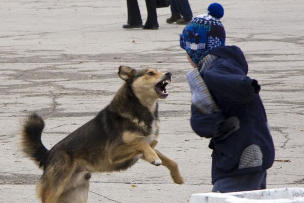 У Чернівцях собака покусав дитину