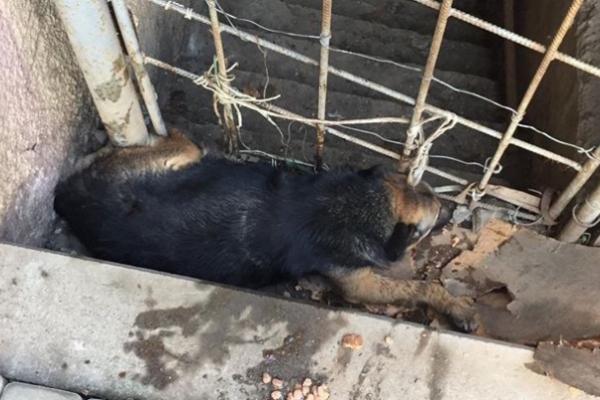 У Чернівцях врятували собаку, якого затиснуло між арматурою