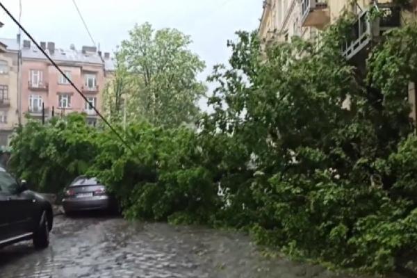 У центрі Чернівців дерево впало на припарковані авто