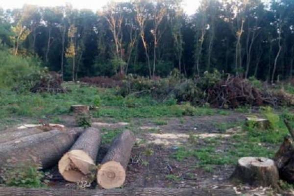 На Буковині за порушення природоохоронного законодавства екоінспекція нарахувала збитків на 10 мільйонів гривень