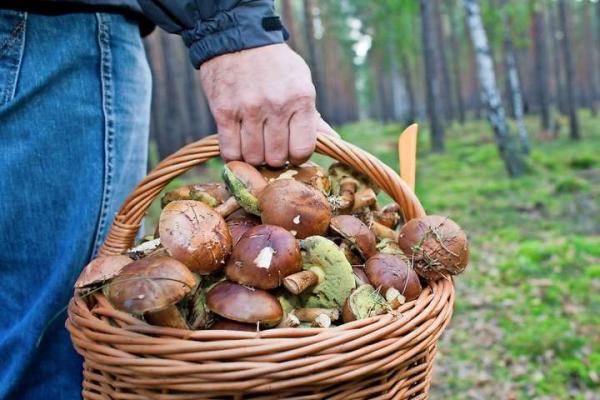 На Буковині вся сім'я отруїлася грибами