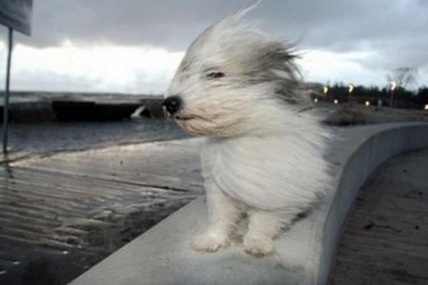Сьогодні на Буковині очікується сильний вітер