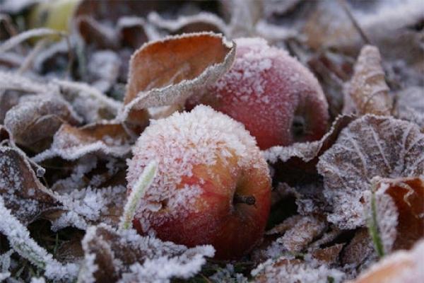 У Чернівецькій області прогнозують заморозки