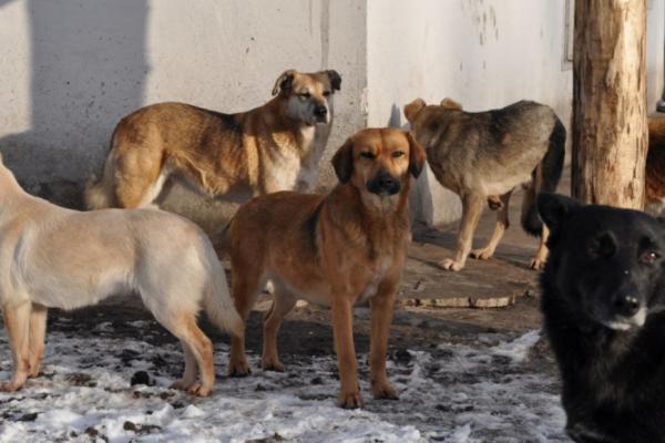 У Чернівцях труять безпритульних собак