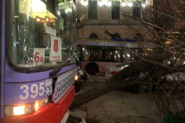 Водій тролейбусу, який зніс дерево біля Ратуші, звільнився і сплатив майже 40 тисяч компенсації