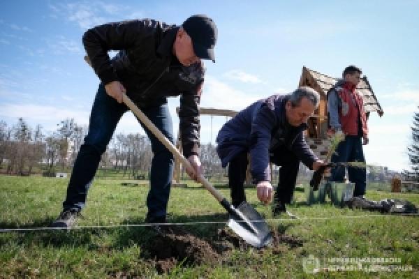 У музеї просто неба в Чернівцях посадили близько сотні хвойних дерев