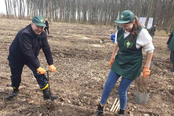 Від дубів і буків до білих ялиць: упродовж доби в лісах Буковини висадили понад 90 тисяч дерев