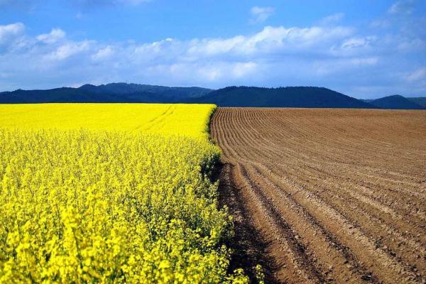 Відтепер українці можуть вільно розпоряджатися власною землею