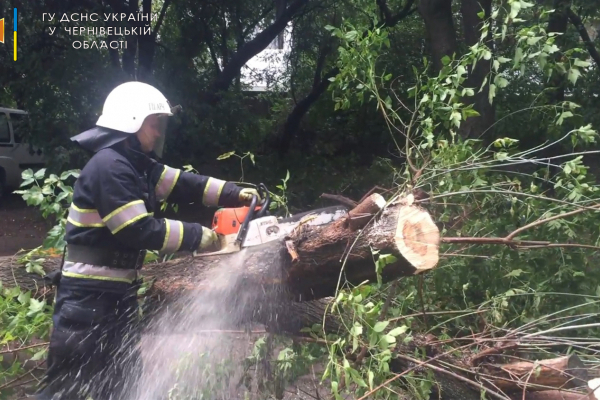 Під час буревію на Буковині дерева падали на будинки, автомобілі, газові та електромережі (ФОТО)