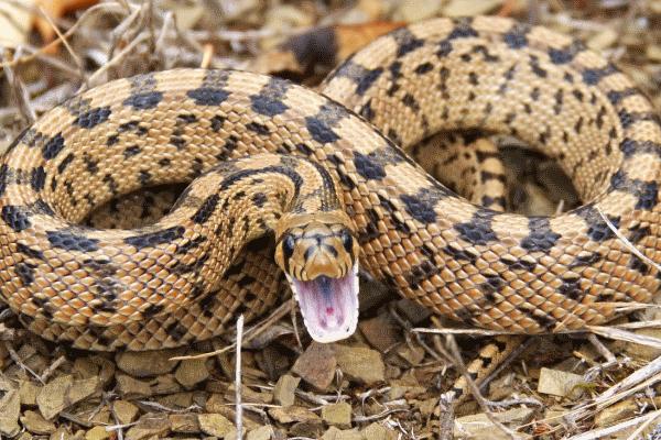 Буковинець потрапив до реанімації через укус змії