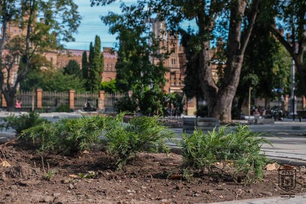 Оновлений сквер з екзотичними деревами біля університету у Чернівцях презентують за два тижні