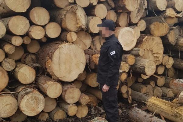Продавали ліс із заповідної зони Чернівецької області. СБУ зупинили злочинну схему (ФОТО)