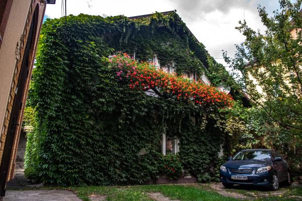 Чернівецький фотограф показав, як виглядають англійські джунглі у середмісті (ФОТО)
